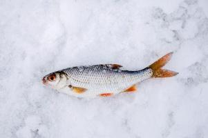 Народная рыбалка на Средней Волге
